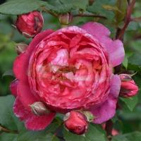 roza-credit-mutuel3C04F31E-5FBF-6521-4CD8-82604AA1F553.jpg